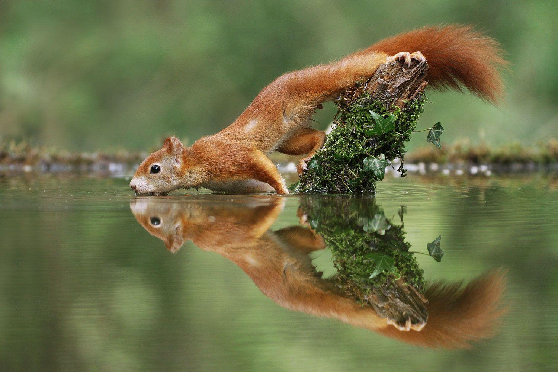 Прикольные фото и картинки природы, дни открытка фото