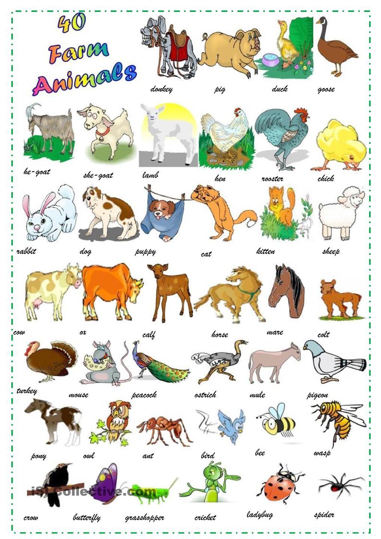 Animals Farm Animals Animals Farm Animals Pictures [ 1440 x 1018 Pixel ]