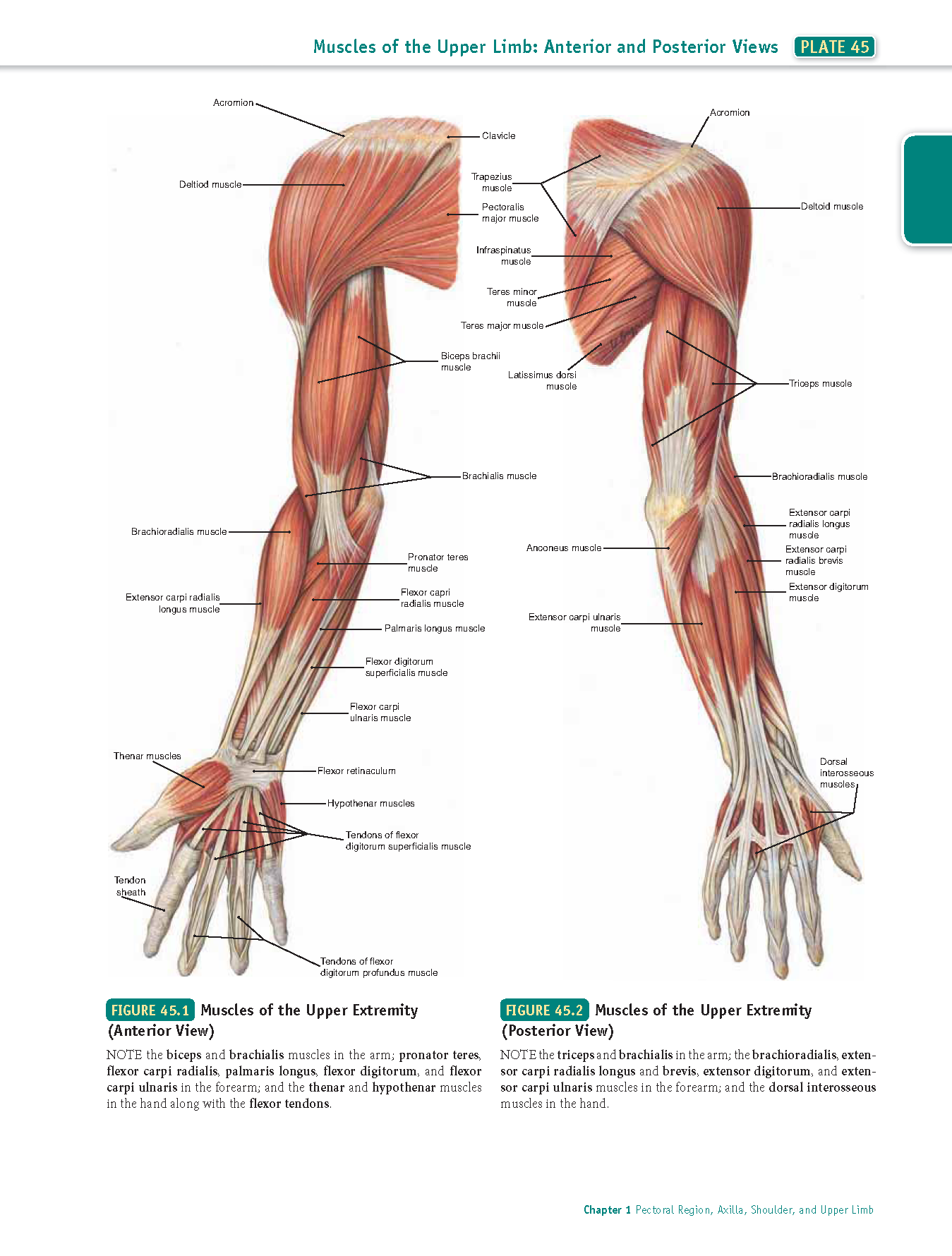 step 1 medical boards #usmle #books #pdf #usmlebookspdf #step1 ...