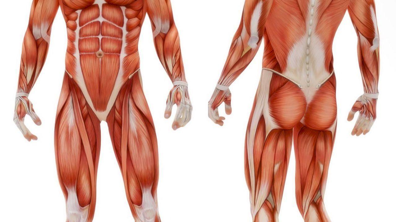 ما هو جسم الإنسان Human Body Human Body