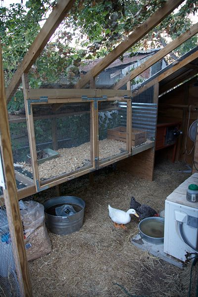 Coturnix Quail Cage Construction Chicken Coop With Quail Hutch Expansion