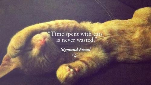 Sigmund Freud Quotes Sayings Deep Wise Time Freud Quotes Cat Quotes Cats