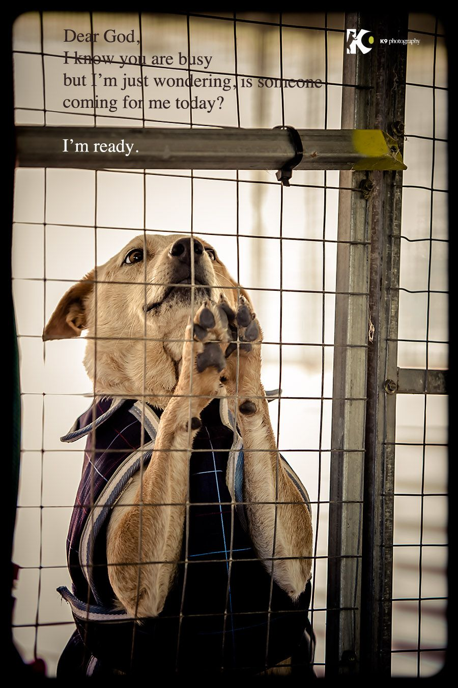 Shelter Dog S Prayer Dear God I Know You Are Busy But I M Just