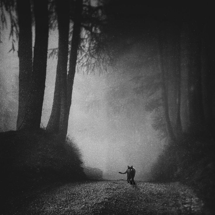 ando fuchs cat  photography, black and white