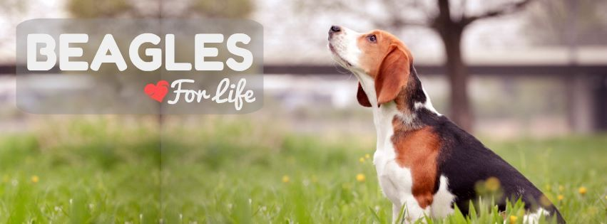 Beagle Pictures Image By Cherilynn David Pirtle On All God S