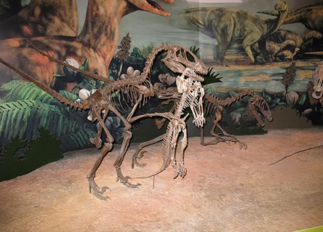 Deinonychus Dinosaur Fossils Fossils Paleontology