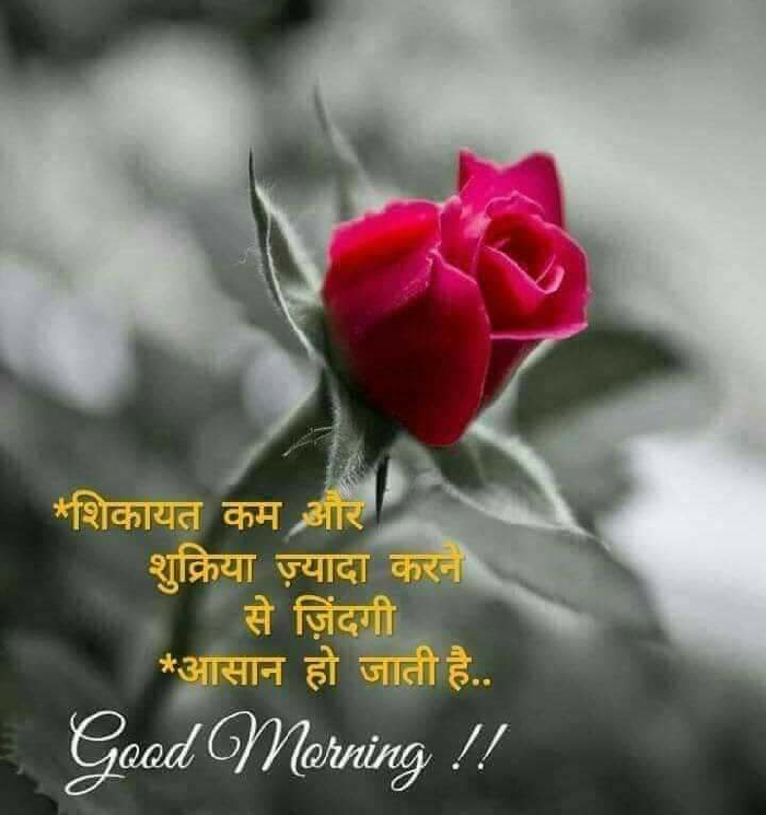 Quotes And Whatsapp Status Videos In Hindi Gujarati Marathi Good Morning Roses Good Morning Friends Quotes Good Morning Wishes