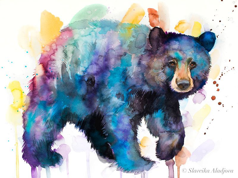 American Black Bear Watercolor Painting Print By Slaveika Aladjova