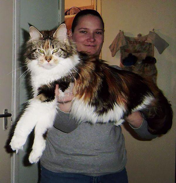 Felsebiyat Dergisi – Popular Maine Coon Kittens For Sale Mn
