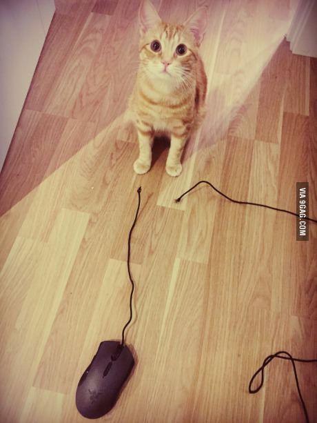 My cat, everyone.