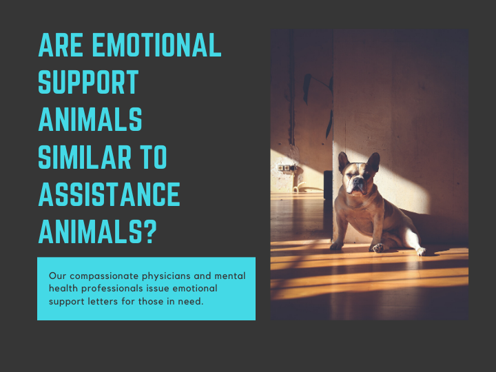 Is Emotional Support Animals Similar To Assistance Animals Emotional Support Animal Emotional Support Emotions