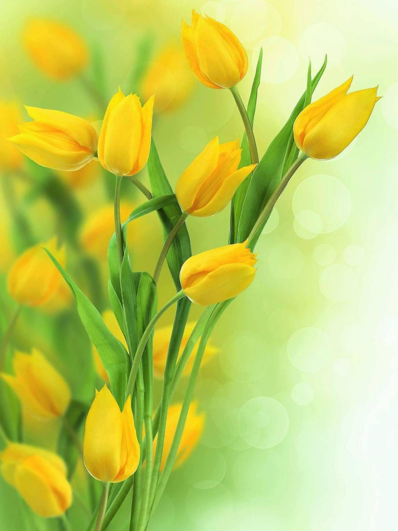 Love Surreal Yellow Tulips Flower Wallpaper Tulips