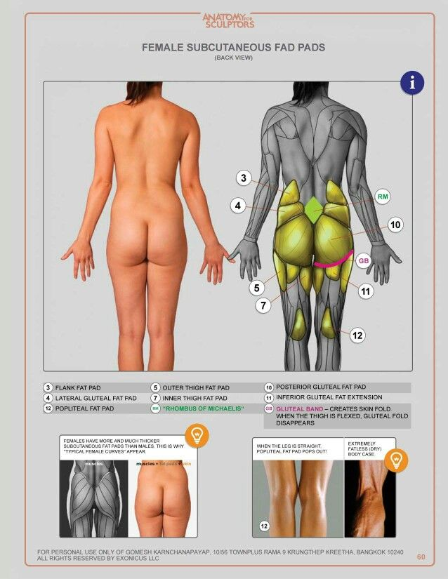 Female anatomy for artist | Template/Reference/Lesson | Pinterest ...