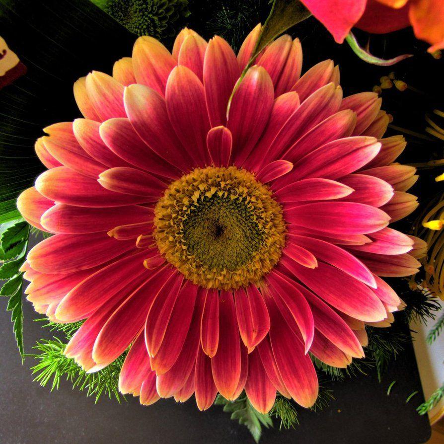 pretty colors | 3D Papercraft Items | Pinterest | Flower bouquets ...