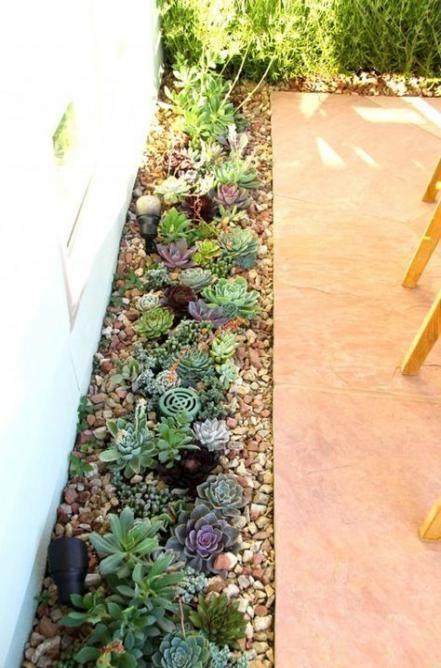44+ Ideas for garden rock flowers plants,  44+ Ideas for garden rock flowers plants,