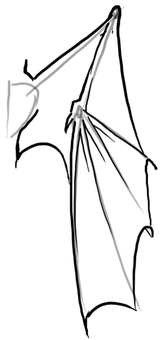 how to draw a dragon wings down