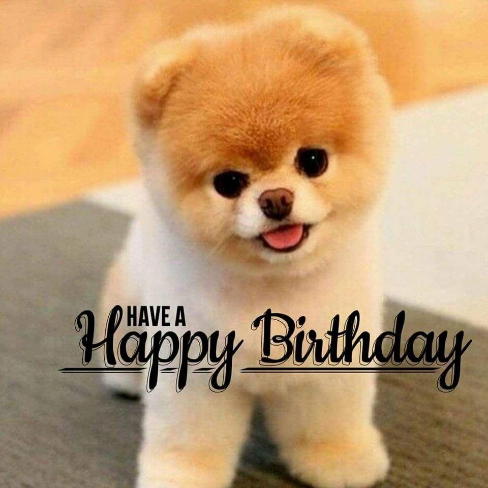 13++ Happy birthday animal gif ideas in 2021