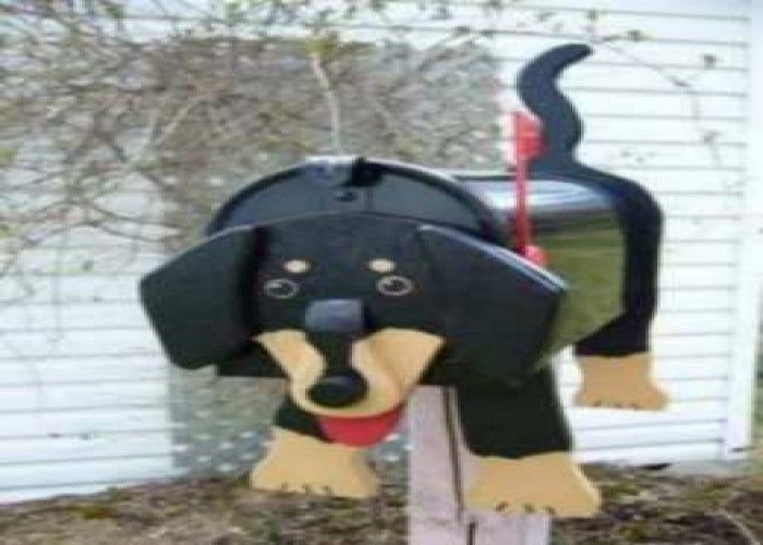 Dachshunds For Sale In Vermont Google Search Used Furniture