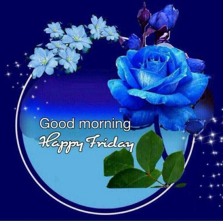 blue rose happy friday morning image friday happy friday good
