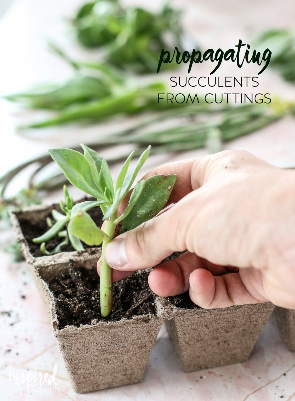 Succulent Propagation Inspired by Charm Propagating