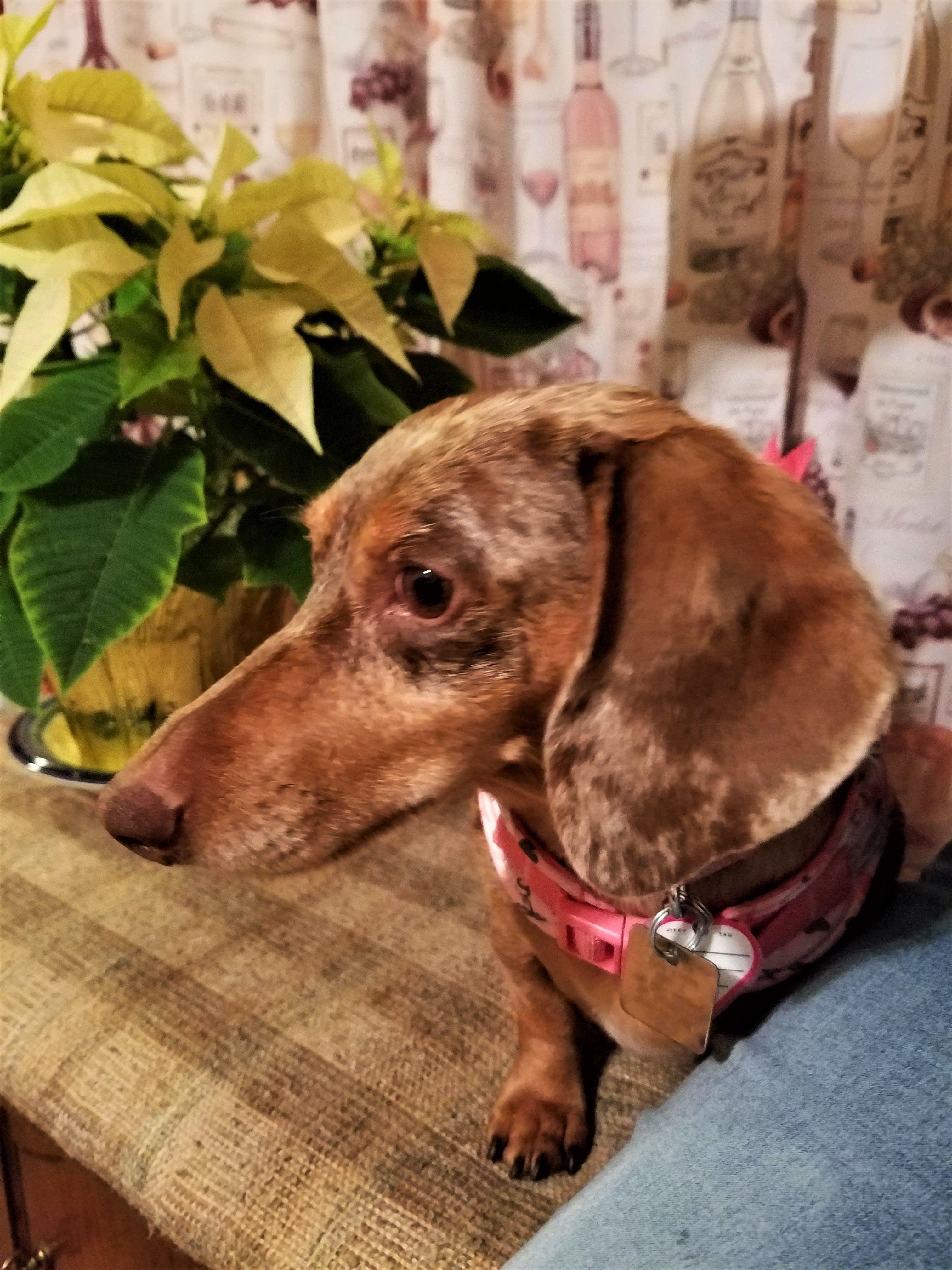 Meet Mimi In Vt An Adoptable Pet Dog Cute Animals Cute Dogs