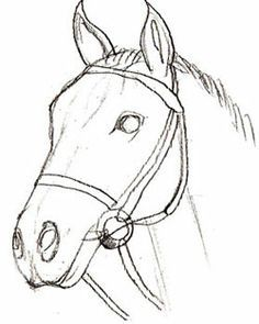 how to draw a realistic horse head how to draw a horse head