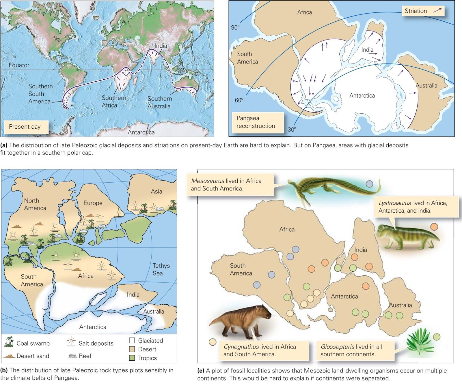 Wegener S Evidence For Continental Drift Learning