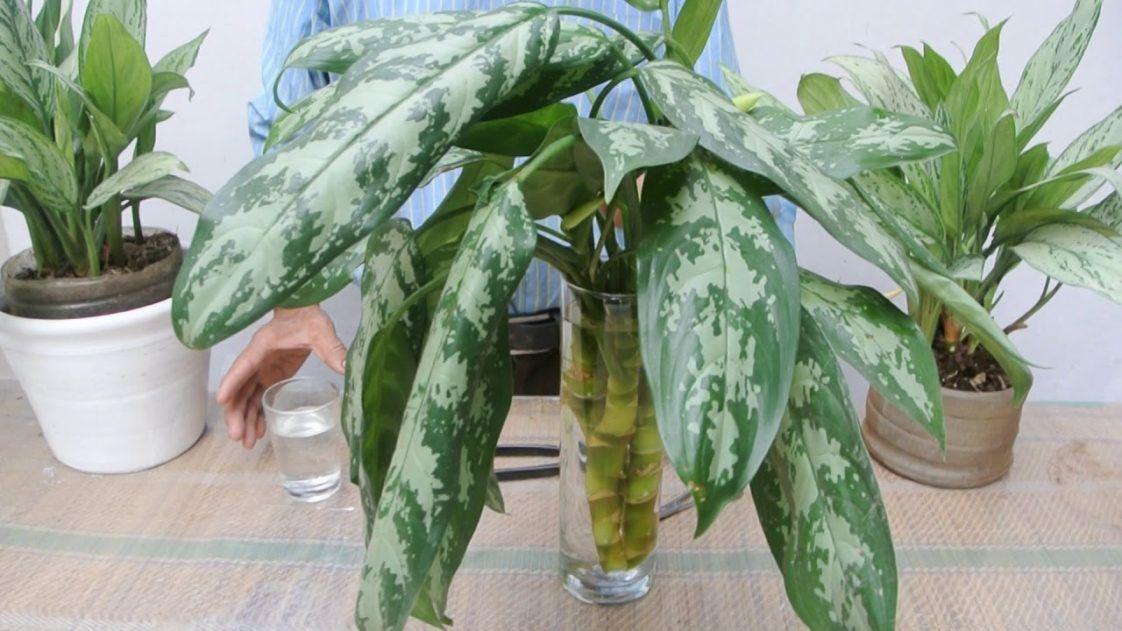 Resultado de imagen para Si tienes una de estas plantas en tu casa, cuídala porque tienes un tesoro