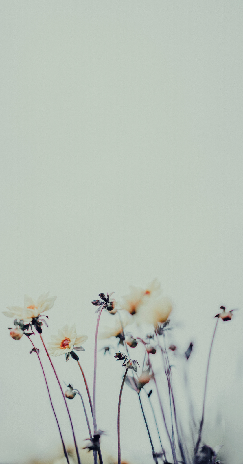 Wallpapers For Iphone 25 Best Floral Wallpapers From Tumblr In 2020 Pink Wallpaper Iphone Floral Wallpaper Flower Wallpaper