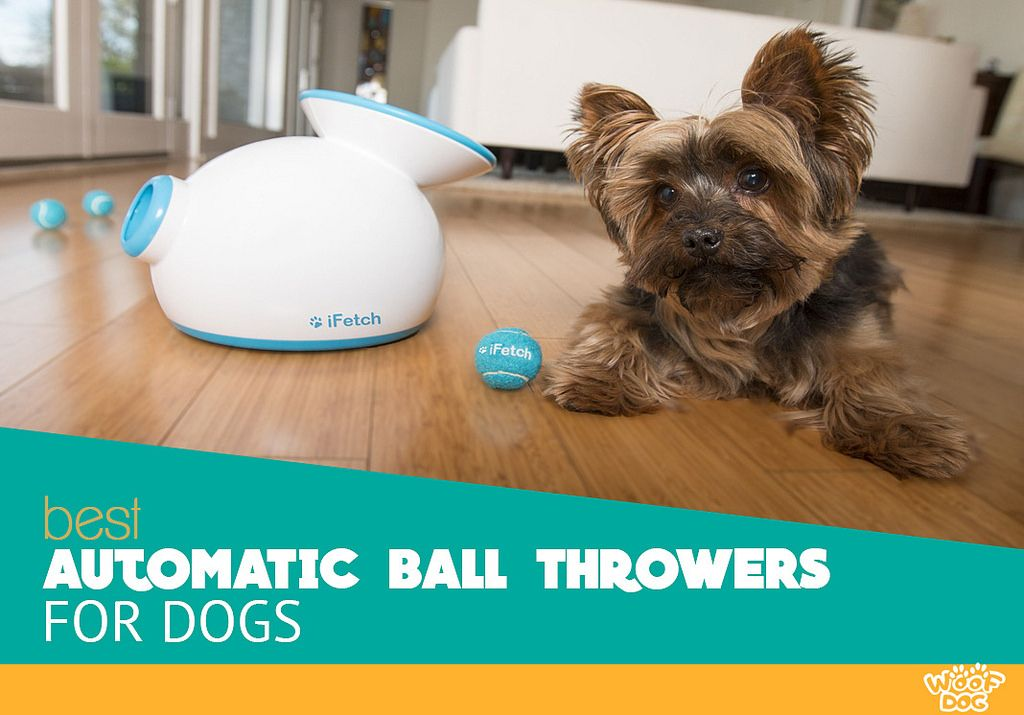 Woof Dog Small Dog Toys Dogs Ball Thrower