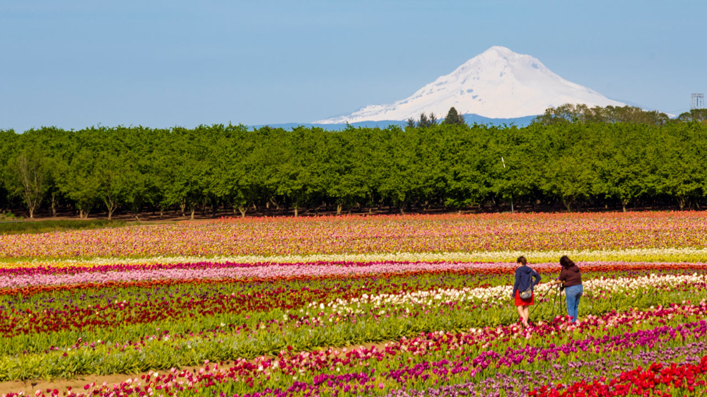 How to Spring Like an Oregonian #oregontravel