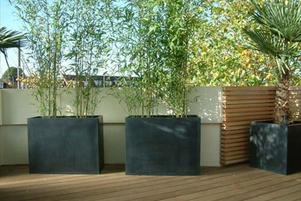 Contemporary planting of a London roof garden Urban Tropics
