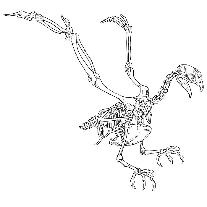 b>Eagle Skeleton</b> Drawing Shown above: modern <b>eagle</b ...