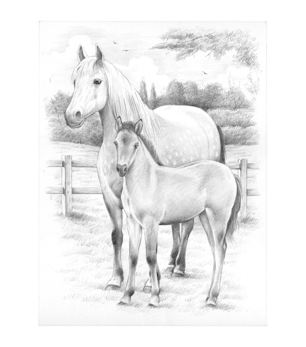Sketching By Number Kit 8 X11 3 4 Horse And Foal Joann Horse Coloring Pages Horses Horse Drawings [ 1360 x 1200 Pixel ]