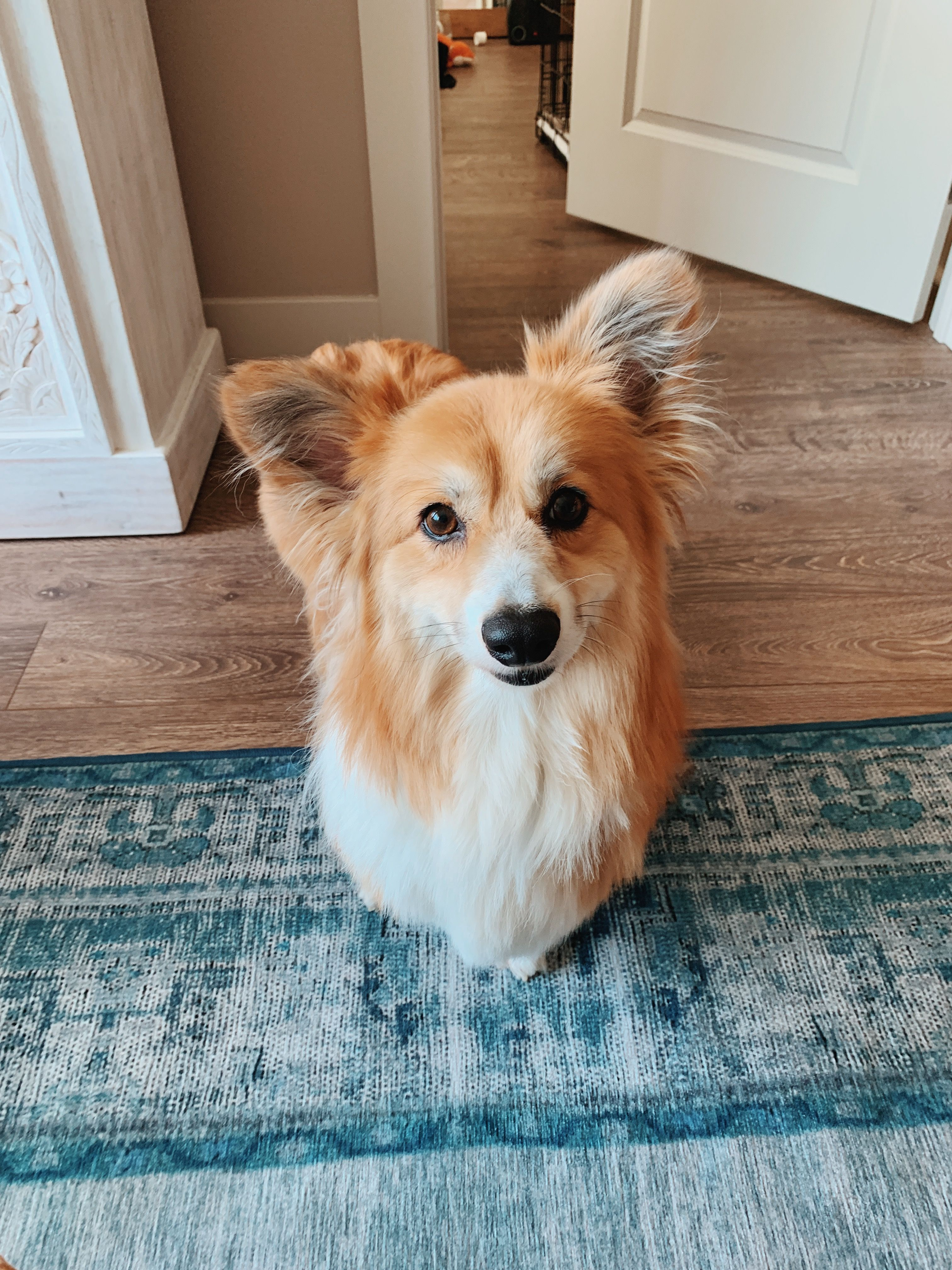 Pin By Eleanora Rinaldi On For The L Ve Of Dogs Cuddly Animals Cute Animals Corgi