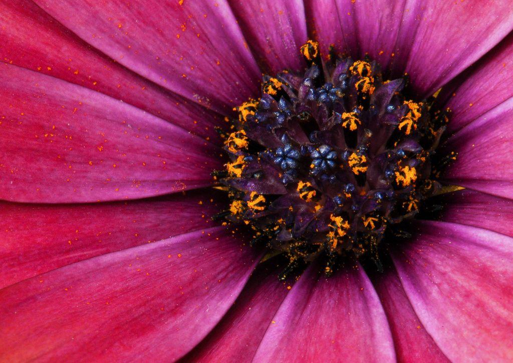 World in a Flower - DSC_1442 | par Dylan Parker