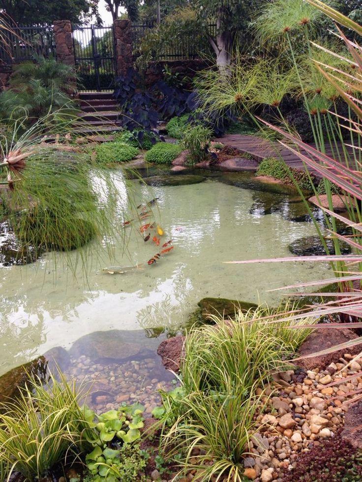 Pin Von House Plants Auf Balik Havuzu Wasserspiel Garten Gartenteich Wassergarten