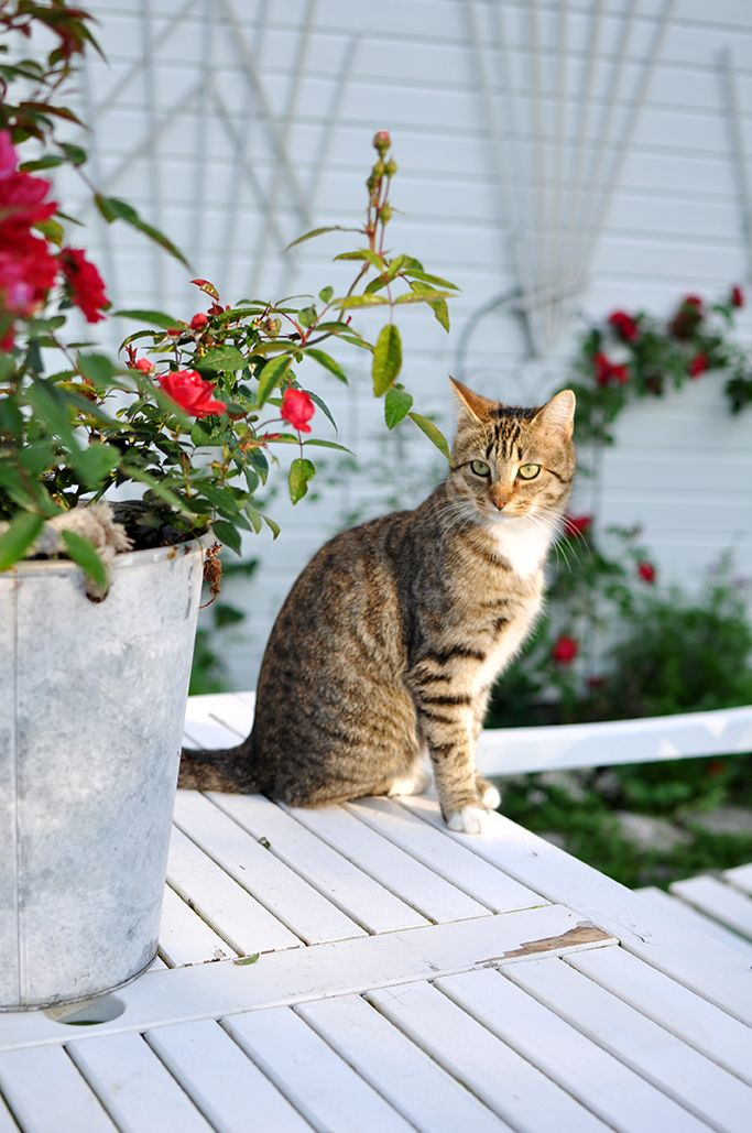 Image result for sunday summer cat