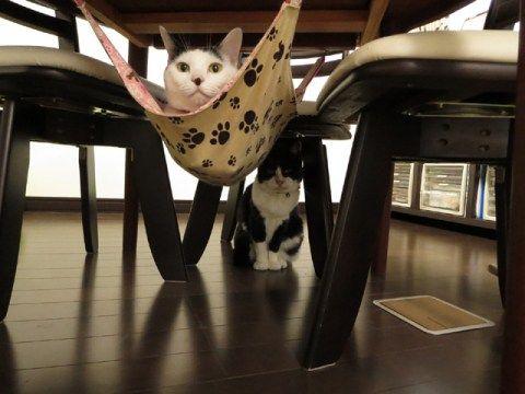 里親さんブログW(ダブル)おたんじょうび。 - http://iyaiya.jp/cat/archives/77676