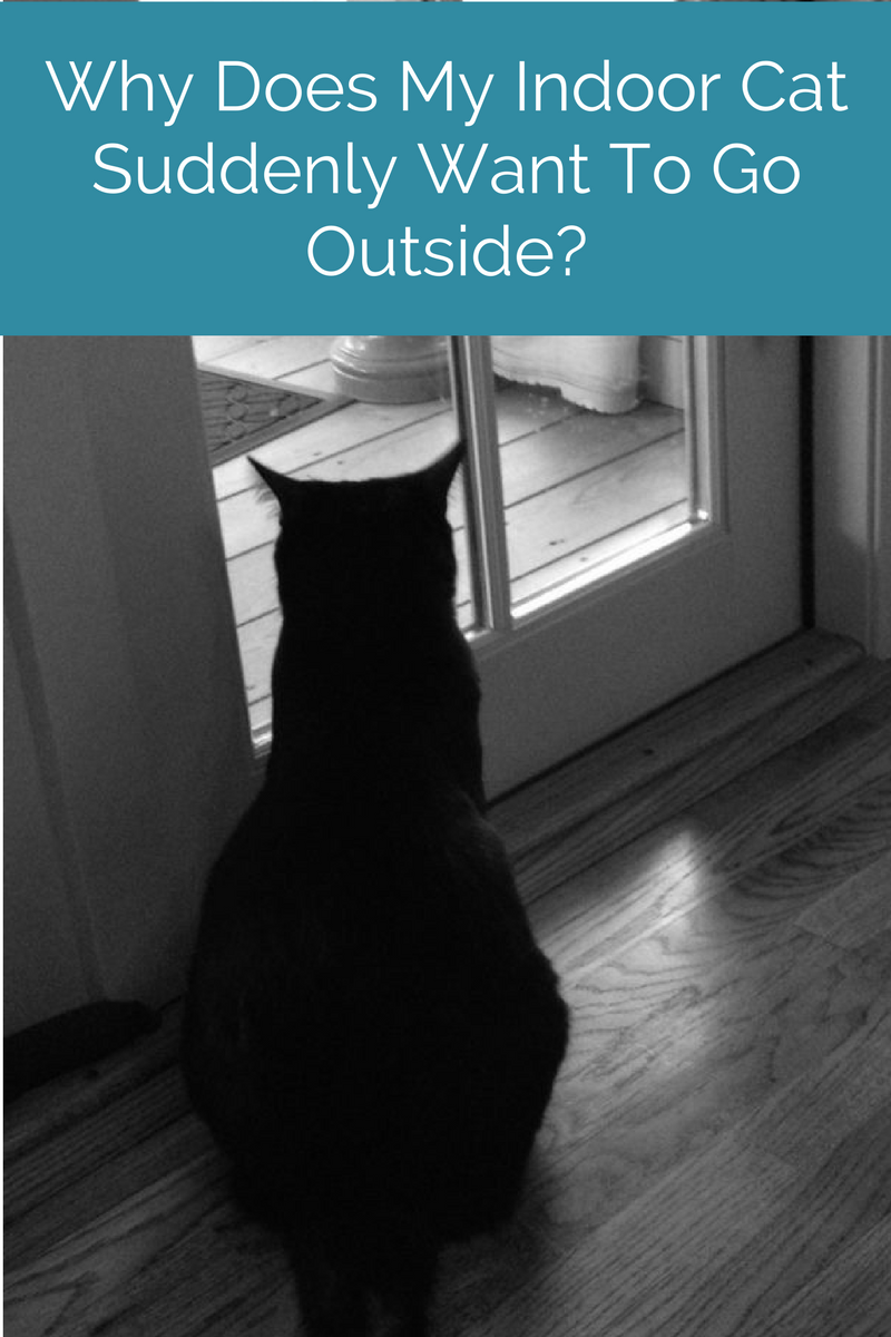 Cat Behavior When Your Indoor Cat Suddenly Wants To Go Out Cat Behavior Indoor Cat Cats