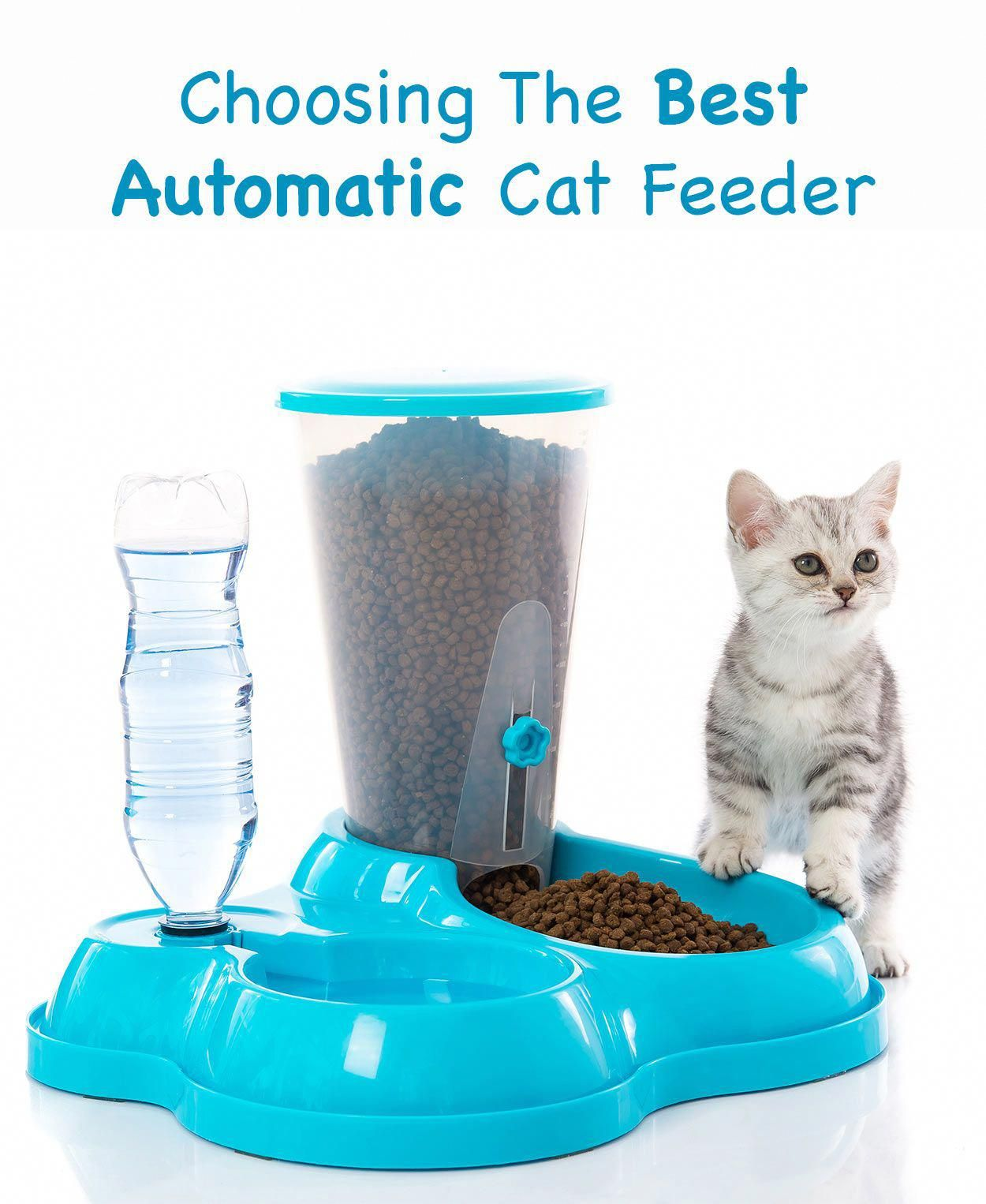 Best Automatic Cat Feeder. Great Product Reviews. #typesofcats