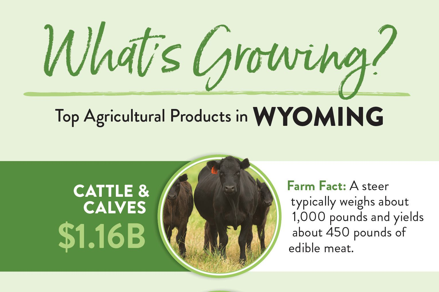 Top 10 Wyoming Ag Products (Infographic) Farm facts