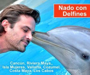 Nado con Delfines en Cancún: www.vivecancun.com/paseo-de-un-dia.php?c=20