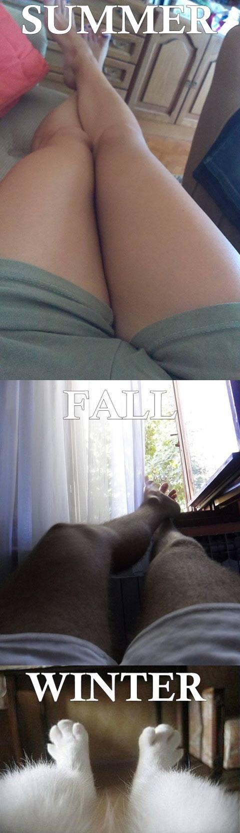 Shaved Legs Humor ...LOL...