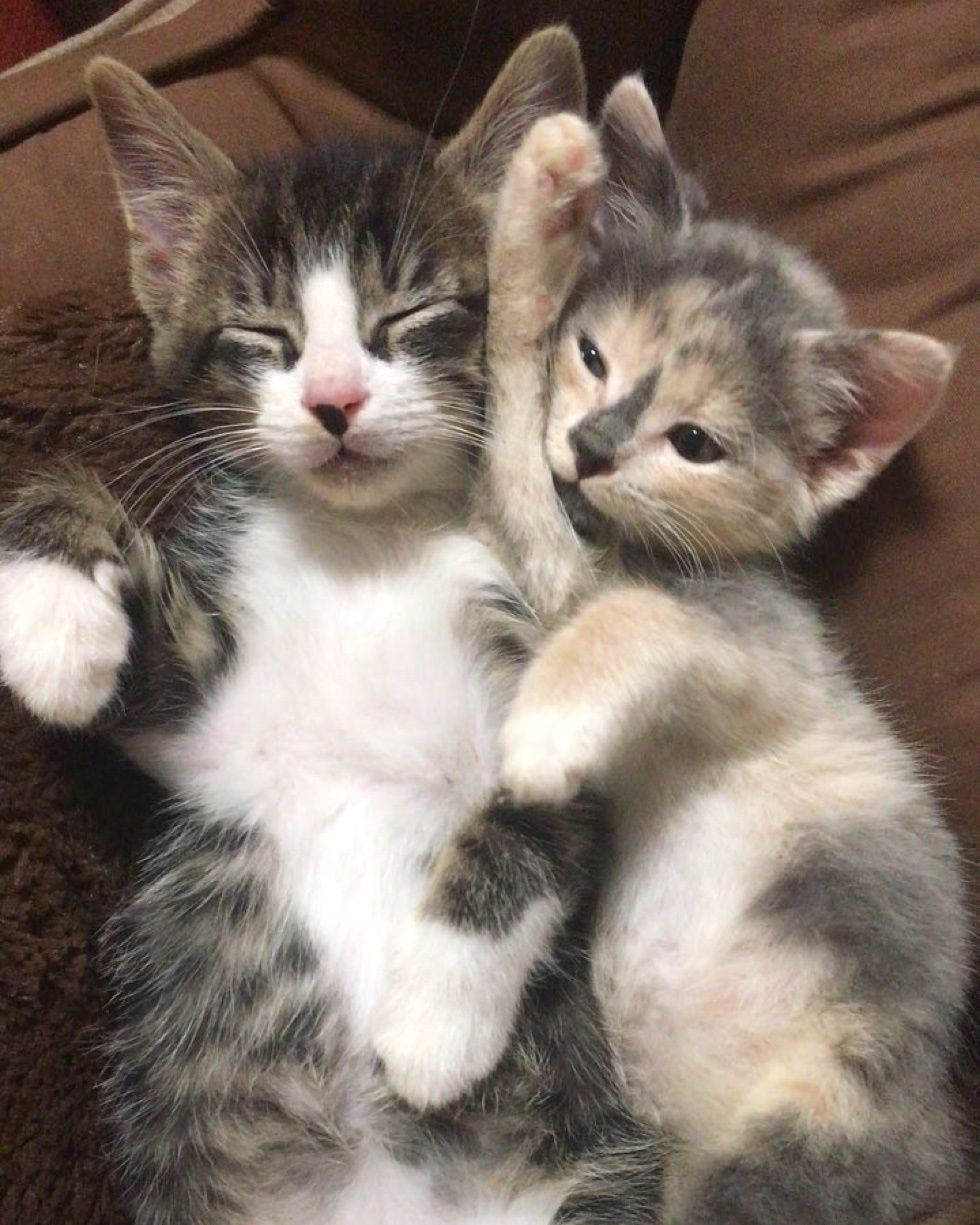 Kitten With Tremors Finds Cuddly Friends Kitten And Dog Who Help Him Heal Love Meow Kittens And Puppies Cats And Kittens Cute Cats