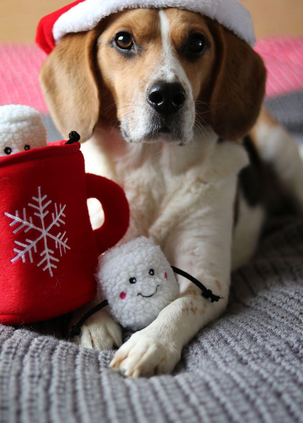 christmas beagle - Christmas Beagle