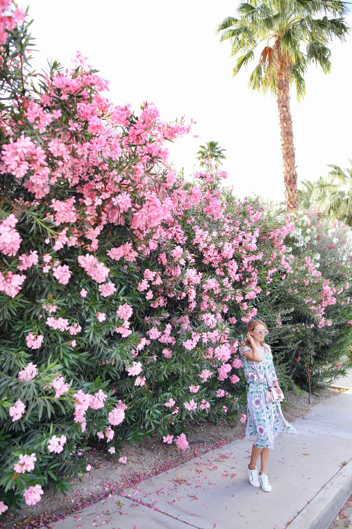 Palm Springs La 17 Pinterest Palm Springs Palm And Travel Bugs