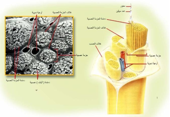 Pin By Chemistry On الحيوية Blog Posts Blog