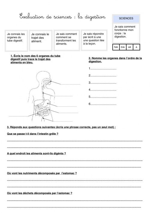 Evaluation Digestion Sciences Cm1 Appareil Digestif Et Science