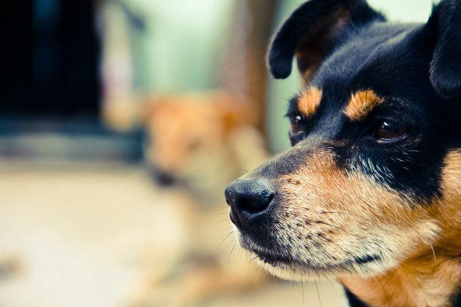 Jake, my photogenic dog! #dogs #dog